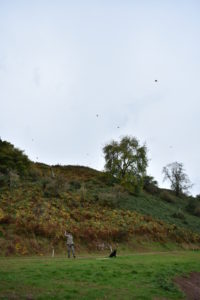 Game birds flying overhead at Fenton Brunt Club